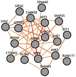 Genoma humano y autismo